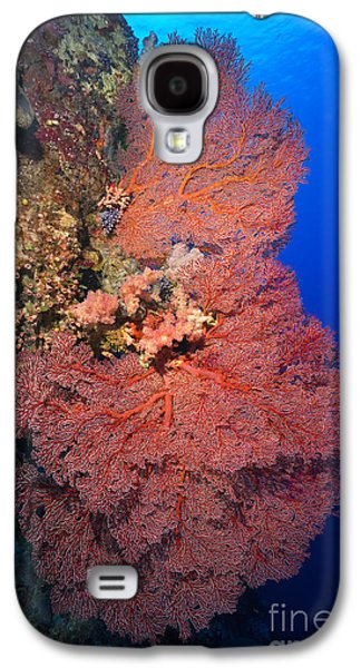 Plankton Galaxy S4 Cases - Gorgonians Galaxy S4 Case by Aaron Whittemore
