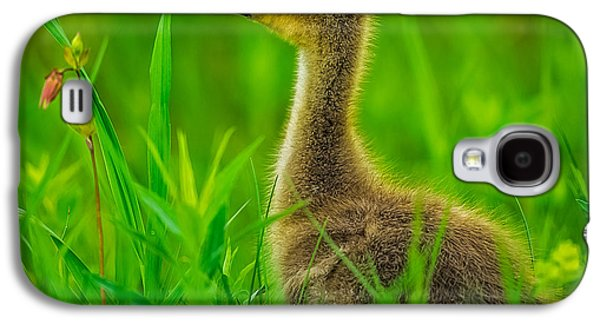 Young Birds Galaxy S4 Cases - Gosling Galaxy S4 Case by Paul Freidlund