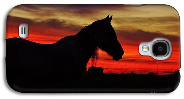 Gracie At Sunset Galaxy S4 Case by Lynda Dawson-Youngclaus