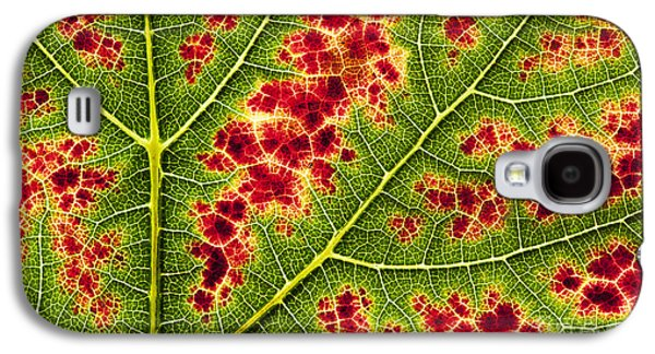 Grapevines Photographs Galaxy S4 Cases - Grape Leaf Texture Galaxy S4 Case by Tim Gainey