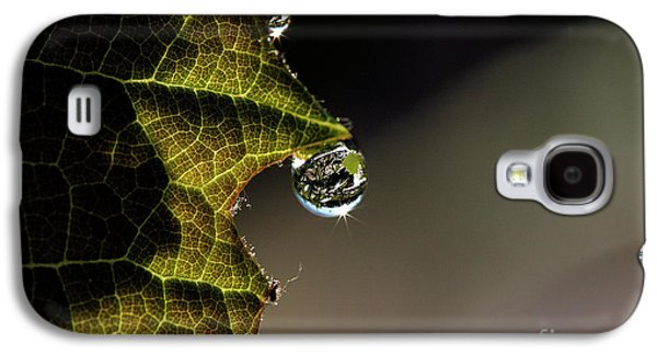 Concord Grapes Galaxy S4 Cases - Grape Leaf with Rain Drop Galaxy S4 Case by Cindi Ressler