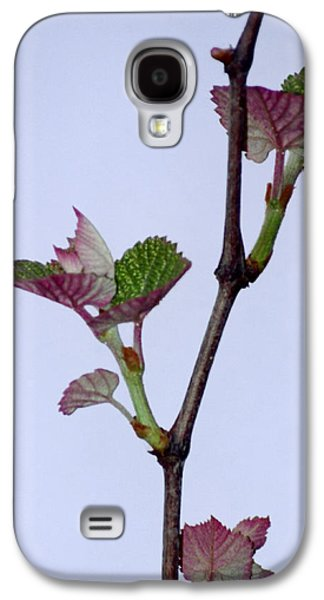Grapes Art Deco Galaxy S4 Cases - Grape Leaves Galaxy S4 Case by Cynthia Syracuse