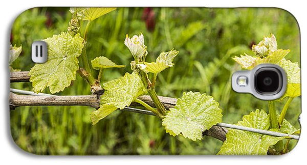 Grape Leaves In Early Spring Galaxy S4 Case by Jean Noren