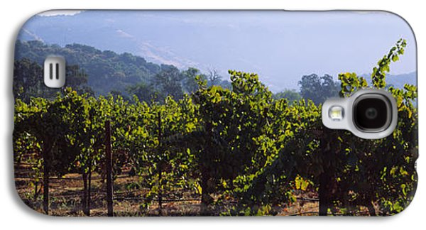 Vineyard In Napa Galaxy S4 Cases - Grape Vines In A Vineyard, Napa Valley Galaxy S4 Case by Panoramic Images