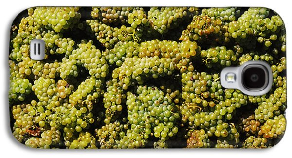 Winery Photography Galaxy S4 Cases - Grapes In A Vineyard, Domaine Carneros Galaxy S4 Case by Panoramic Images