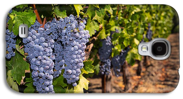 Napa Valley And Vineyards Galaxy S4 Cases - Grapes on The Vines in The St Helena Vineyards Napa California DSC1729 Galaxy S4 Case by Wingsdomain Art and Photography