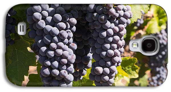 Napa Valley And Vineyards Galaxy S4 Cases - Grapes on The Vines in The St Helena Vineyards Napa California DSC1731 square Galaxy S4 Case by Wingsdomain Art and Photography