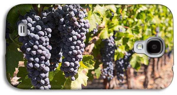Napa Valley And Vineyards Galaxy S4 Cases - Grapes on The Vines in The St Helena Vineyards Napa California DSC1731 Galaxy S4 Case by Wingsdomain Art and Photography