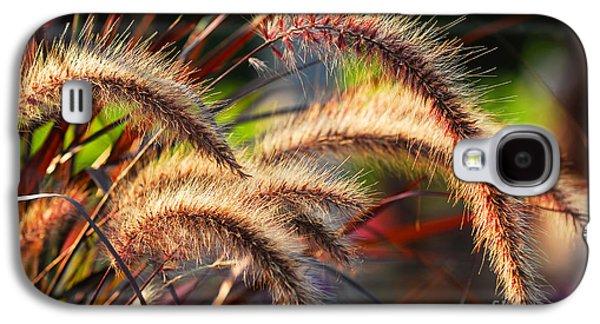Field Photographs Galaxy S4 Cases - Grass ears Galaxy S4 Case by Elena Elisseeva