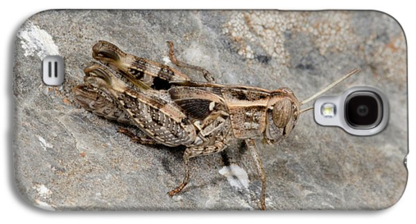 Grasshopper Calliptamus Barbarus Juvenile Galaxy S4 Case by Nigel Downer