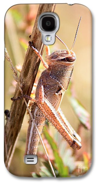 Grasshopper In The Marsh Galaxy S4 Case by Carol Groenen