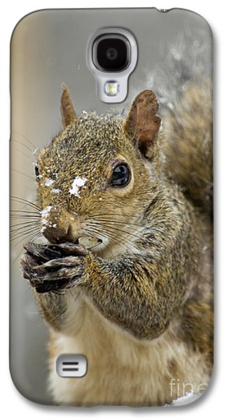 Indiana Winters Galaxy S4 Cases - Gray Squirrel - D008392  Galaxy S4 Case by Daniel Dempster
