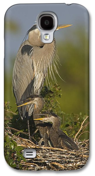 Three Chicks Galaxy S4 Cases - Great Blue Heron With Chicks Florida Galaxy S4 Case by Tom Vezo