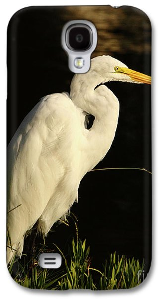 Business Decor Galaxy S4 Cases - Great Egret At Morning Galaxy S4 Case by Robert Frederick