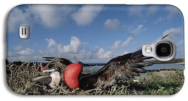 Wildlife Celebration Galaxy S4 Cases - Great Frigatebird Female Eyes Courting Galaxy S4 Case by Tui De Roy