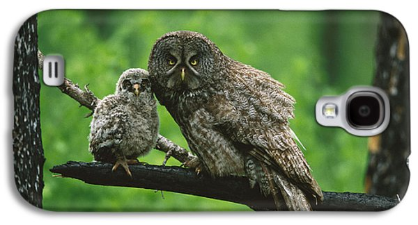 Baby Bird Galaxy S4 Cases - Great Gray Owl With Chick Saskatchewan Galaxy S4 Case by Tom Vezo