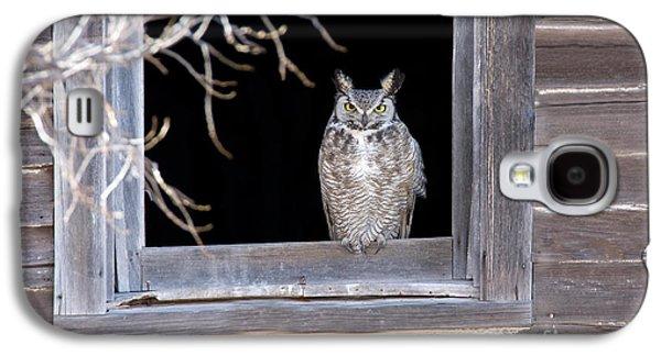 Us Wildllife Galaxy S4 Cases - Great Horned Owl Galaxy S4 Case by Jim Zipp