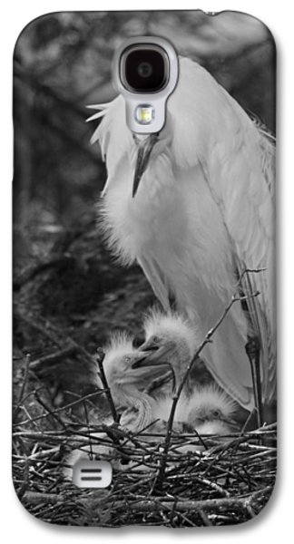 Young Birds Galaxy S4 Cases - Great White Egrets - Sibling Rivalry Galaxy S4 Case by Suzanne Gaff