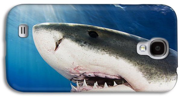Undersea Photography Galaxy S4 Cases - Great White Shark Carcharodon Galaxy S4 Case by Dave Fleetham