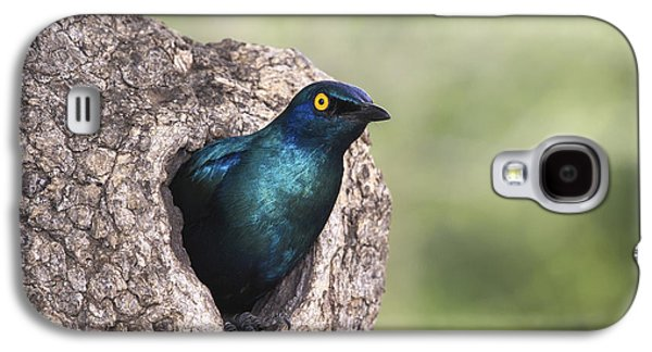 Greater Blue-eared Glossy-starling Galaxy S4 Case by Andrew Schoeman