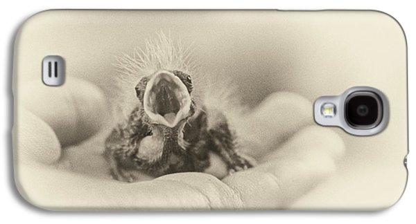 Baby Bird Photographs Galaxy S4 Cases - Greed Galaxy S4 Case by Caitlyn  Grasso