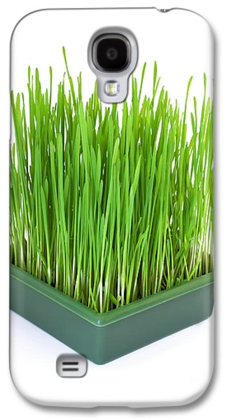 Agronomy Galaxy S4 Cases - Green christmas wheat Galaxy S4 Case by Sinisa Botas