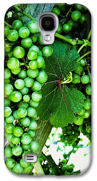 Original Photographs Galaxy S4 Cases - Green Grapes Galaxy S4 Case by Colleen Kammerer