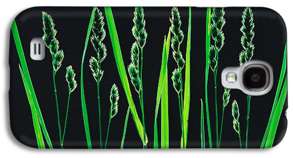 Studio Photography Galaxy S4 Cases - Green Grass Reeds On Black Background Galaxy S4 Case by Panoramic Images