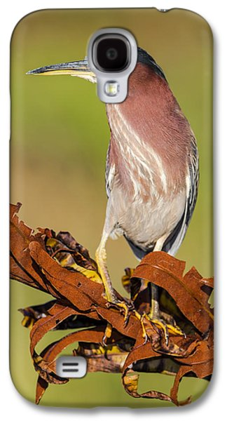 United States Galaxy S4 Cases - Green Heron Galaxy S4 Case by Andres Leon