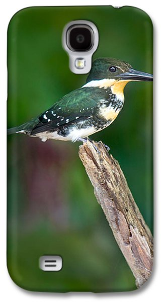 Green Kingfisher Chloroceryle Galaxy S4 Case by Panoramic Images