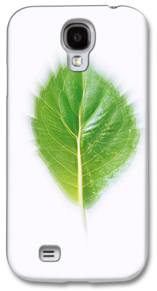 Studio Photography Galaxy S4 Cases - Green Leaf On Beige Background Galaxy S4 Case by Panoramic Images