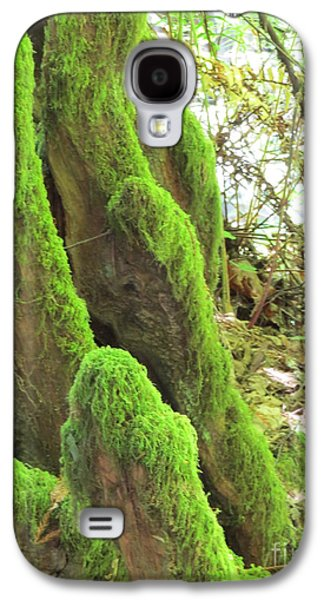 San Francisco Famous Photographers Galaxy S4 Cases - Green Moss Galaxy S4 Case by Mary Mikawoz