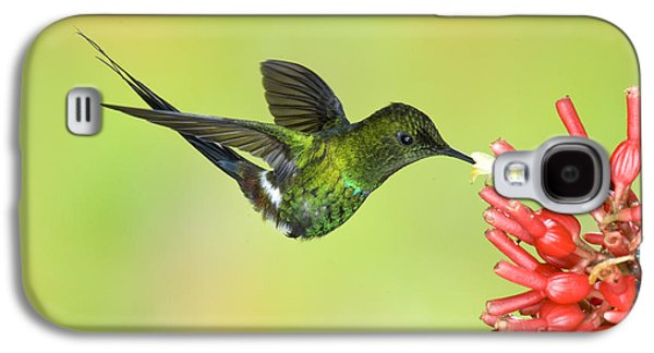 Discosura Galaxy S4 Cases - Green Thorntail Hummingbird Galaxy S4 Case by Anthony Mercieca