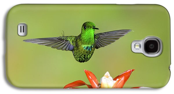 Discosura Galaxy S4 Cases - Green Thorntail Male Galaxy S4 Case by Anthony Mercieca