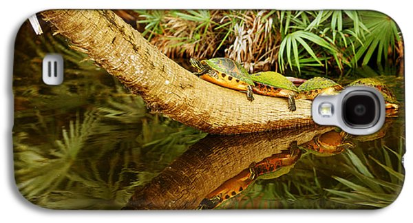 Overhang Photographs Galaxy S4 Cases - Green Turtles Chelonia Mydas On A Tree Galaxy S4 Case by Panoramic Images