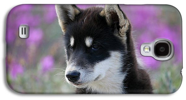 Greenland, Sisimiut, Young Husky Dog Galaxy S4 Case by Aliscia Young