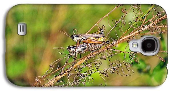 Gregarious Grasshoppers Galaxy S4 Case by Al Powell Photography USA