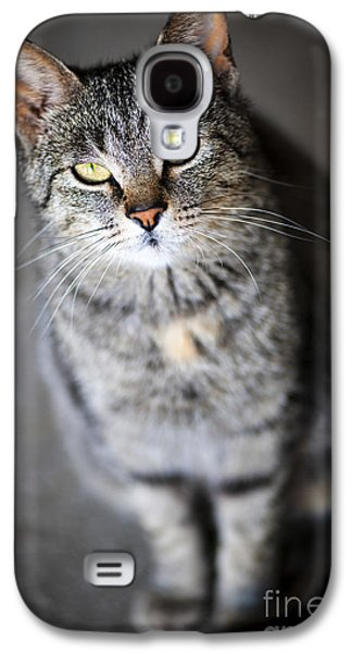 Gray Tabby Galaxy S4 Cases - Grey cat portrait Galaxy S4 Case by Elena Elisseeva