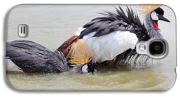 Water Play Galaxy S4 Cases - Grey Crowned Crane washing in natural water pool Galaxy S4 Case by Suriya  Silsaksom