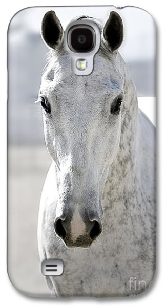 Quarter Horses Galaxy S4 Cases - Grey Ghost Galaxy S4 Case by Holly Martin