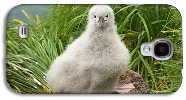 Grey-headed Albatross Chick S Georgia Galaxy S4 Case by