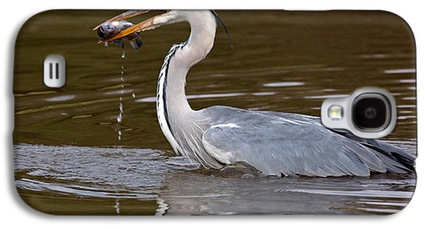 Anticipation Photographs Galaxy S4 Cases - Grey Heron, Kenya Galaxy S4 Case by Panoramic Images