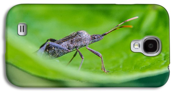 Preditor Galaxy S4 Cases - Grey Plant Bug 1 Galaxy S4 Case by Douglas Barnett