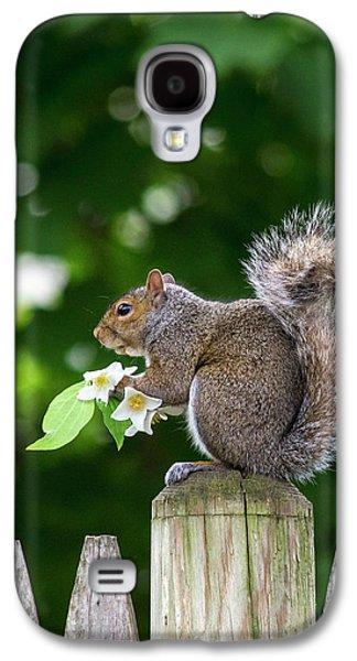 Grey Squirrel Galaxy S4 Case by Babak Tafreshi