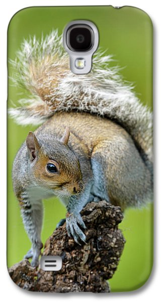 Grey Squirrel Galaxy S4 Case by Dr P. Marazzi