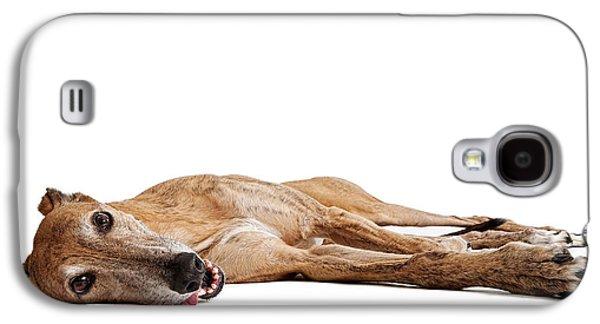 Greyhound Galaxy S4 Cases - Greyhound Dog Laying Down Galaxy S4 Case by Susan  Schmitz