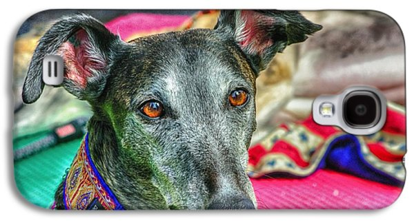 Greyhound Rescue  Galaxy S4 Case by Dennis Baswell