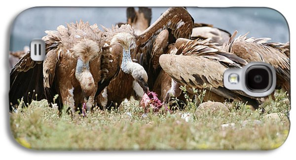 Griffon Vultures Scavenging Galaxy S4 Case by Dr P. Marazzi