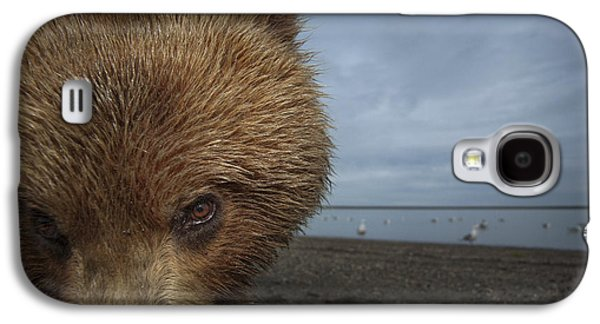 Tidal Photographs Galaxy S4 Cases - Grizzly Bear In Tidal Flats Alaska Galaxy S4 Case by Ingo Arndt