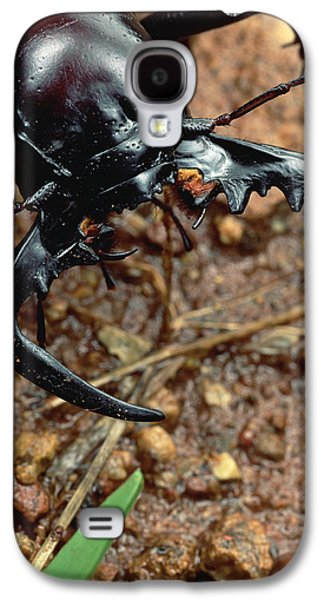 Mining Photos Galaxy S4 Cases - Ground Beetle Portrait Kruger Np South Galaxy S4 Case by Mark Moffett